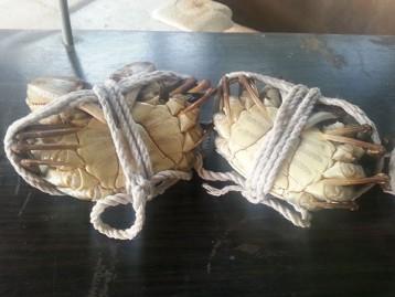 大閘蟹-公蟹